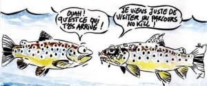 La survie des poissons blessés
