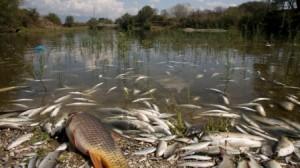 La pollution des eaux ... partie 1